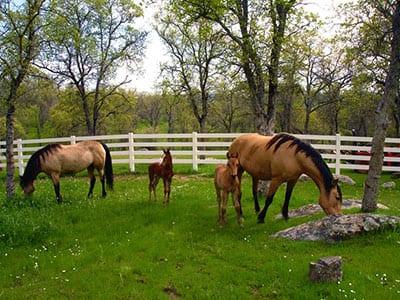 pvc paardenomheining