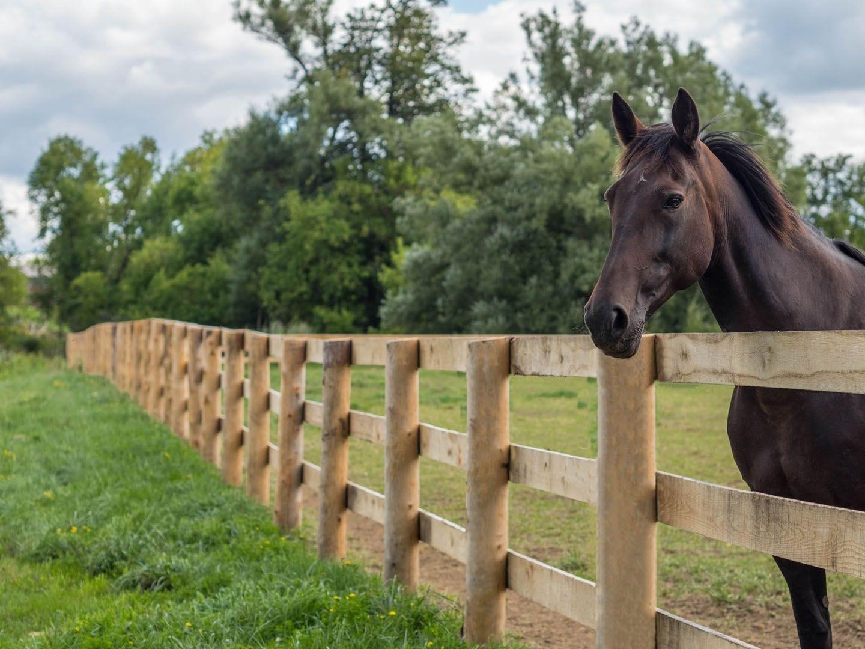 houten paardenomheining