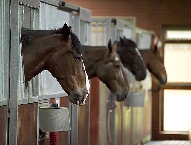 paardenstal kopen
