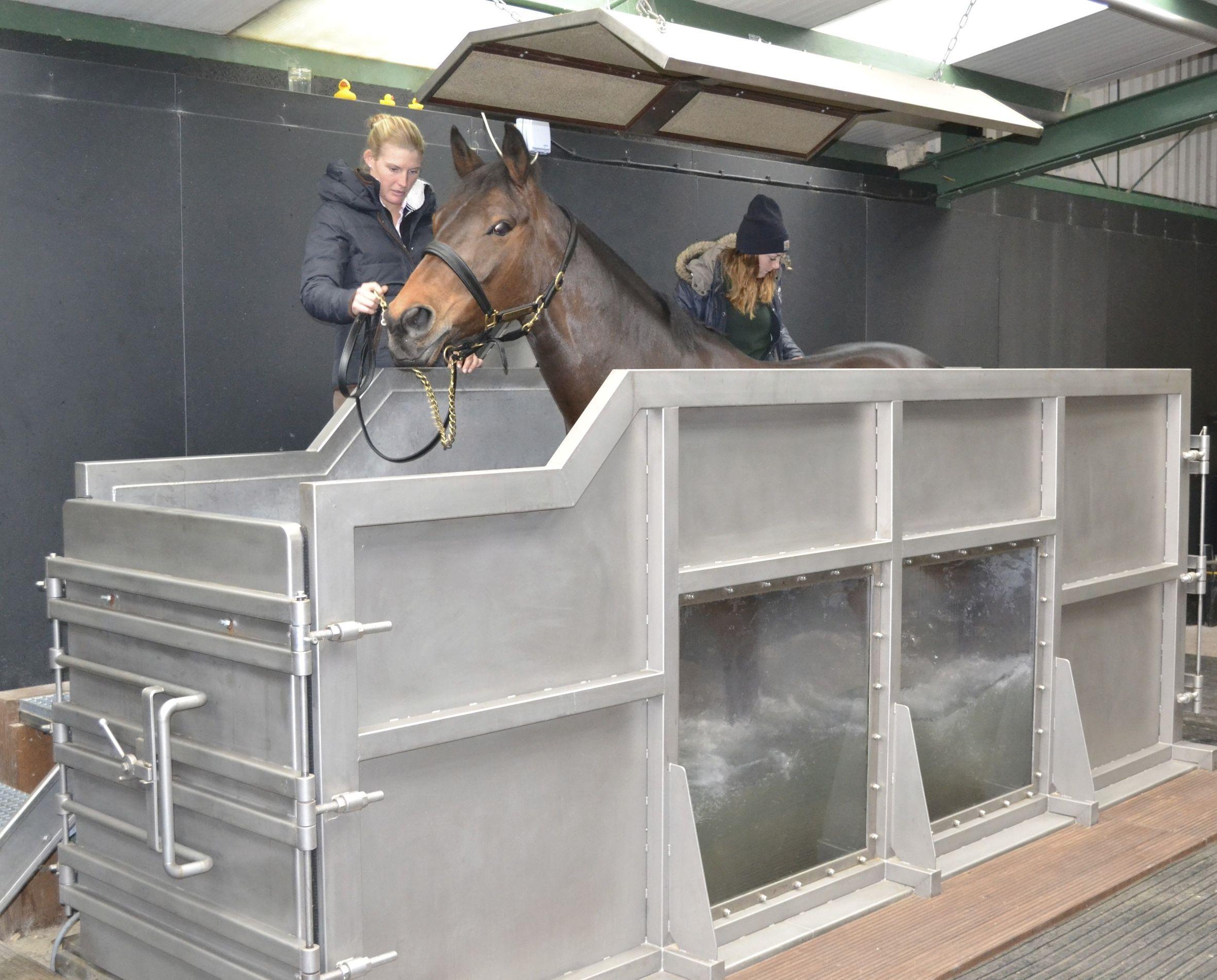 aquatrainer paarden